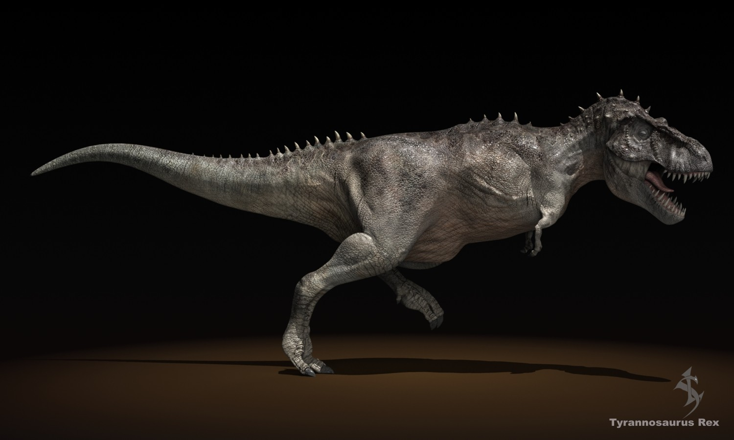 characteristics of tyrannosaurus rex Characteristics: tyrannosaurus rex was a large (at least 40 feet), massively built (5-6 metric tons), bipedal dinosaur the head was huge.
